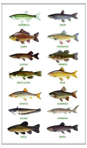 laghetti pesca sportiva milano